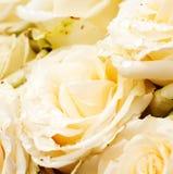 Белая роза с падениями Стоковое Изображение