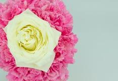 Белая роза Стоковые Фотографии RF