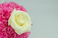 Белая роза Стоковое Изображение
