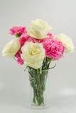Белая роза Стоковая Фотография RF