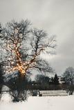 Белая скамейка в парке под загоренным деревом в зиме стоковые фотографии rf