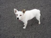 Белая собака на улице Стоковые Изображения