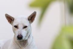 белая собака Стоковые Изображения RF