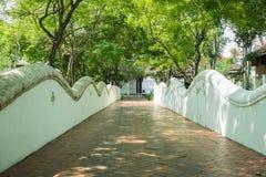 Белая стена и зеленое дерево Стоковое Изображение