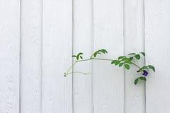 Белая стена с деревом Стоковое Изображение