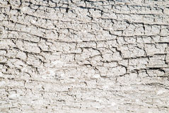 Белая текстура коры дерева Стоковое Изображение RF