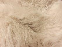 Белая текстура меха собаки Стоковое Фото