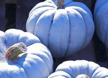 Белая тыква Стоковая Фотография RF