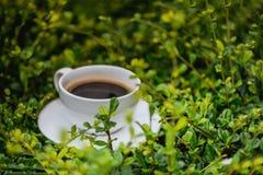 Белая чашка горячего кофе на предпосылке природы зеленого цвета завода Sh Стоковое Изображение