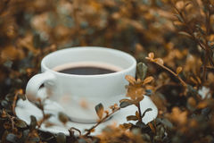 Белая чашка горячего кофе на сухой предпосылке природы коричневого цвета завода Стоковое Фото