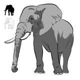 белизна африканского слона Стоковое Изображение RF