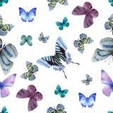 Белизна 05 бабочки безшовная Стоковое Изображение RF