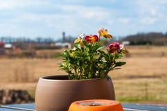 белизна бака изоляции цветка Стоковое Фото