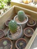 белизна бака предпосылки изолированная кактусом Стоковое Изображение RF
