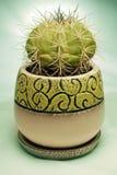 белизна бака предпосылки изолированная кактусом Стоковая Фотография RF