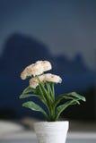 белизна бака цветков Стоковая Фотография RF
