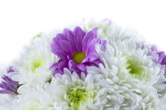 белизна букета изолированная цветком стоковые фотографии rf