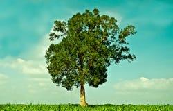белизна вала предпосылки большая зеленая стоящая Стоковые Фото