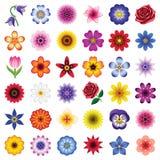 белизна вектора иллюстрации иконы цветка предпосылки установленная Стоковая Фотография