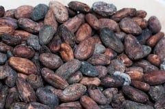 белизна вектора иллюстрации какао фасолей предпосылки Стоковая Фотография RF