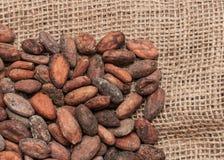 белизна вектора иллюстрации какао фасолей предпосылки Стоковые Изображения