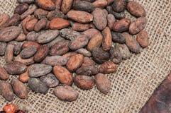 белизна вектора иллюстрации какао фасолей предпосылки Стоковое фото RF