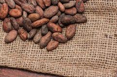 белизна вектора иллюстрации какао фасолей предпосылки Стоковое Фото