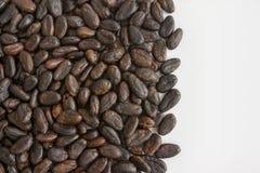белизна вектора иллюстрации какао фасолей предпосылки Стоковые Изображения RF