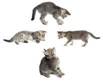 белизна вектора иллюстрации конструкции кота предпосылки установленная Стоковая Фотография RF