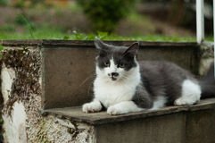 1 белизна версии киски halftone цвета черного кота 2 Стоковое Фото