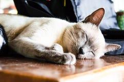 1 белизна версии киски halftone цвета черного кота 2 Стоковые Фото