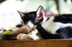 1 белизна версии киски halftone цвета черного кота 2 Стоковое Изображение