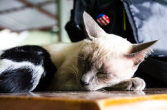 1 белизна версии киски halftone цвета черного кота 2 Стоковое Изображение RF