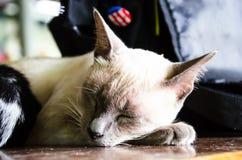 1 белизна версии киски halftone цвета черного кота 2 Стоковые Фотографии RF