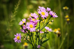 белизна весны пущи цветка Стоковые Изображения RF