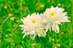 белизна весны пущи цветка Стоковая Фотография RF