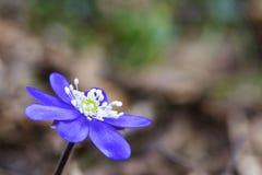 белизна весны пущи цветка Стоковые Фото
