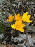 белизна весны пущи цветка Стоковое Изображение RF