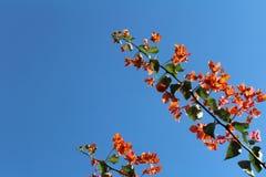 белизна весны пущи цветка стоковые фотографии rf