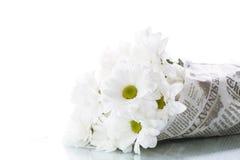 белизна весны сада хризантемы Стоковое Фото