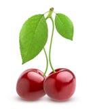 белизна вишни предпосылки легко извлеченная изолированная Стоковые Изображения