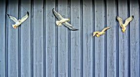 Белизна вычисляет чайок на деревянной стене Стоковые Фотографии RF