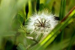 Белизна в растительности Стоковое Фото