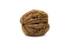 белизна грецкого ореха серии изображения еды предпосылки здоровая Изолированная предпосылка Стоковая Фотография