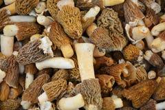 белизна гриба еды предпосылки Стоковое фото RF