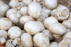 белизна гриба еды предпосылки Стоковая Фотография