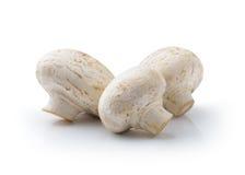 белизна гриба предпосылки изолированная champignon Стоковые Фото
