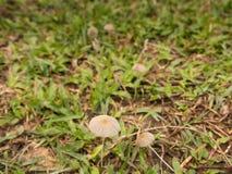 белизна гриба травы шаржа изолированная иллюстрацией Стоковые Изображения