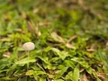 белизна гриба травы шаржа изолированная иллюстрацией Стоковые Фотографии RF