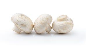 белизна гриба champignon предпосылки Стоковые Изображения RF